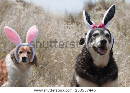 dog dressed up in easter bunny ears