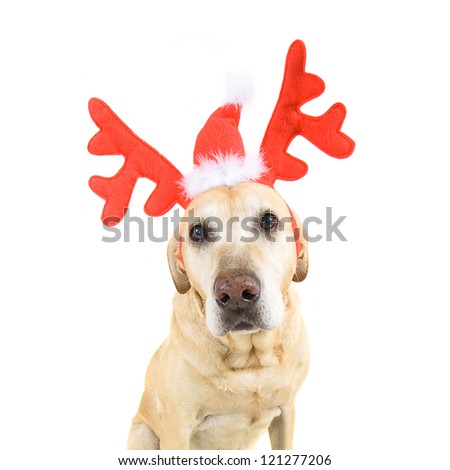 dog dressed up in reindeer antlers