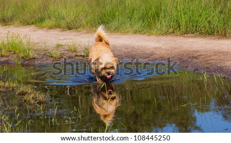 Dog drinking from a pool of water