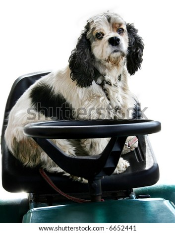 dog driving a vehicle
