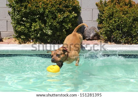 Dog dropping off from the side of the pool for his toy