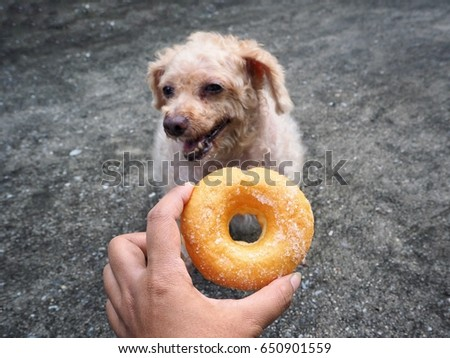 Dog eating donut with hand