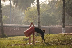 Dog eating from a garbage can at the Shait Gumbad Mosque in Bagerhat, Bangladesh