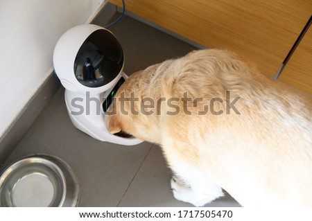 Dog electronic feeder. Labrador eats from a controlled bowl. Robot for a dog. ストックフォト ©