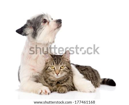 dog embracing cat and looking away. isolated on white background