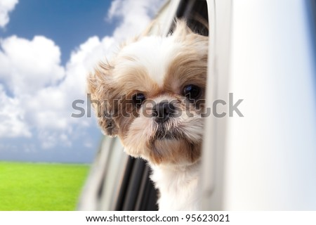 dog enjoying a ride in the car
