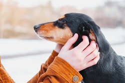 Dog enjoys ear scratches at a walk. Loving pets concept: dachshund with closed eyes getting attention of human