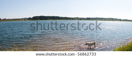 dog enjoys the cool water of a  lake. panorama