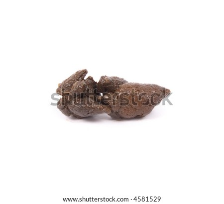 dog excrement - stock photo