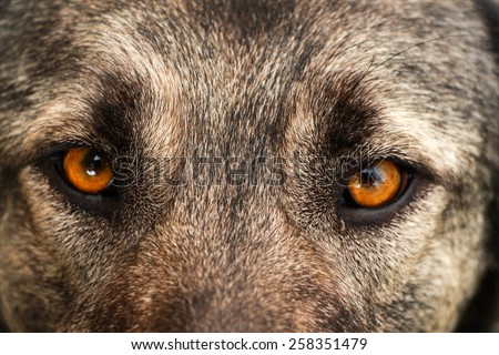 Dog face. Dog view. Close up on eyes of a dog.