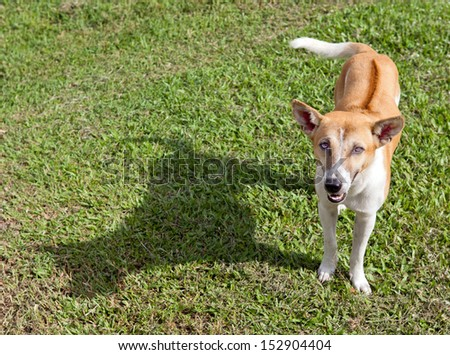 Dog fawning and Shadow on Grass Field in Sunny Day Afternoon