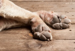 dog feet and legs on wood