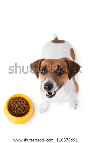 Dog food. Jack Russel terrier with dog bowl on white background