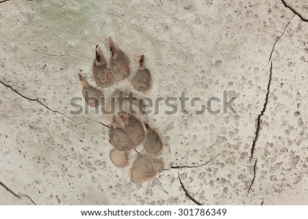 Dog footprints #301786349