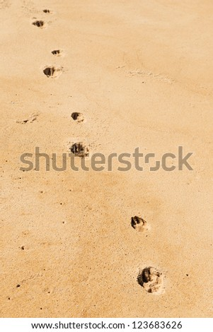 Dog footprints on the sand.