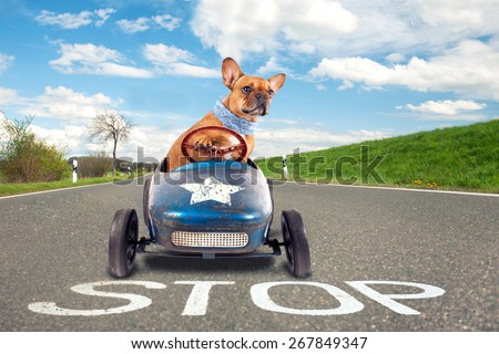 dog (French bulldog) driving a toy car, dog enjoys a a ride in his blue old car