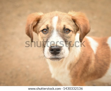 Dog from a shelter 1 1 1