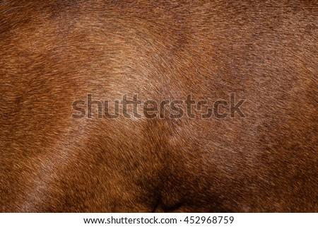 Dog fur. Animal fur texture. Fur fees. Short fur. Brown natural short hair animal close up. The hair coat.