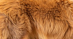 dog fur in the detail - texture