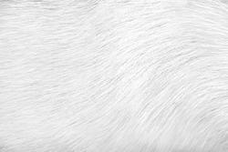 Dog fur texture animal skin white grey background