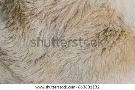Dog fur textures #663601132