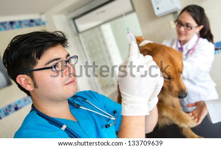 Dog getting a vaccine at the vet and a doctor prepping the needle