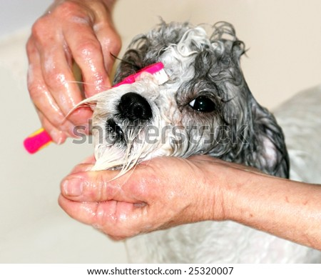 dog getting face washed at groomer
