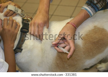 Dog getting his immunization shot