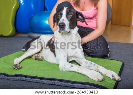 dog getting manual treatment