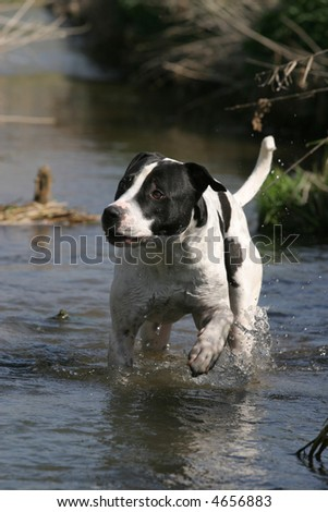 dog getting wet