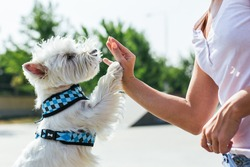 Dog give a high five to female owner