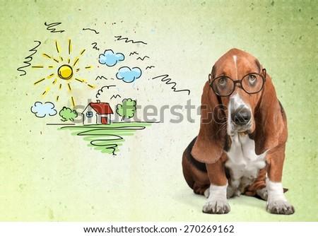 Dog, Glasses, Humor.