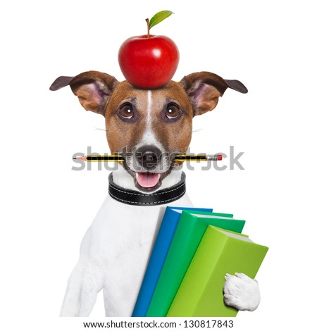 dog going to school with books pencil and apple - stock photo