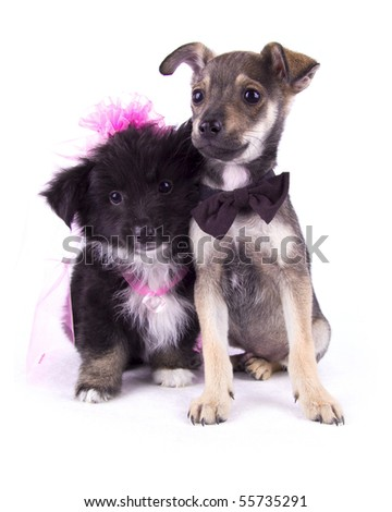 "Dog ""groom"" and ""bride"" on the white isolated background - stock photo"