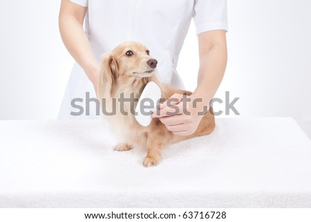 Dog groomer brushing dachshund