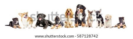 Dog group on a white background #587128742