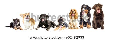 Dog group on a white background #602492933
