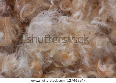 Dog hair background