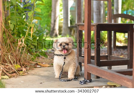 dog happy pet home smile cute face animal sitting background