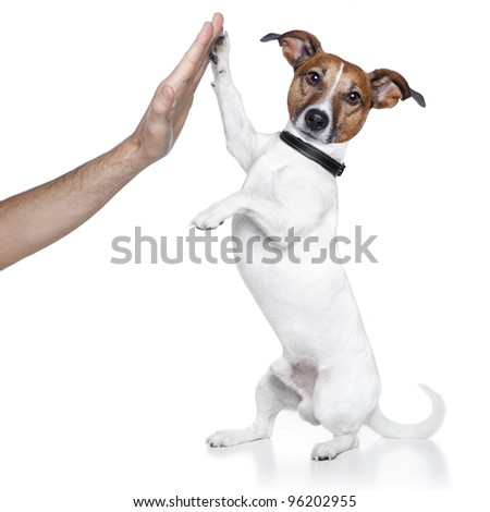 dog high five with male hand - stock photo