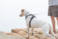 Dog Hiking and Rock Climbing in Acadia National Park, Maine