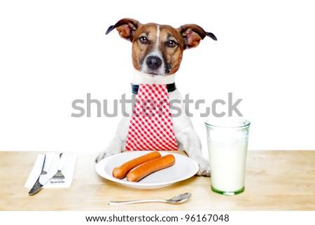 dog holding a white banner