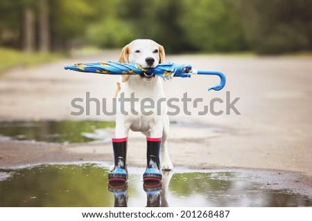 dog holding an umbrella