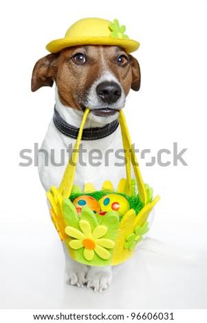 Dog holding colorful easter basket