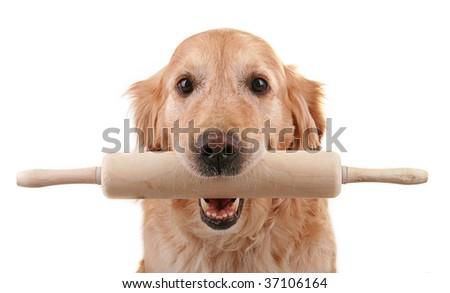 dog holding kitchen roller isolated on white background