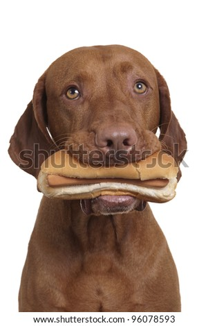 dog holding real hot dog in mouth on white background