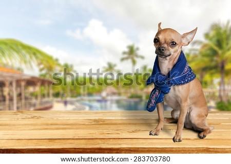 Dog, Humor, Summer.