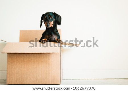 Dog in a box on white background Сток-фото ©