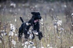 dog in a field of flowers