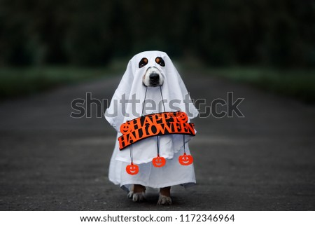 dog in a ghost costume holding a happy halloween sign